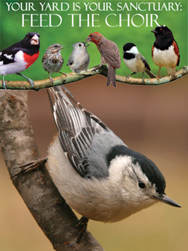 Nuthatch Choir