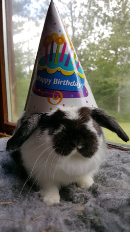 bunny's birthday
