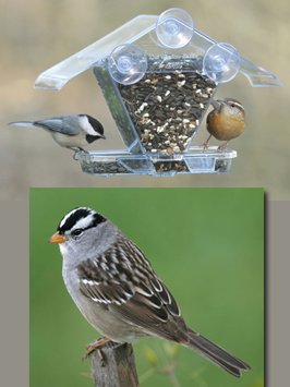 sparrow and Feeder